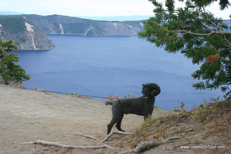 Odie at Crater Lake