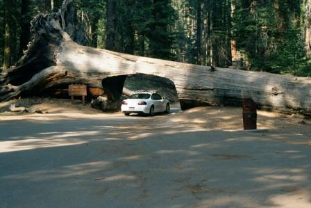 When a tree falls in the forest when a tree falls across the road cut