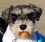 1Sammiedog's Photo