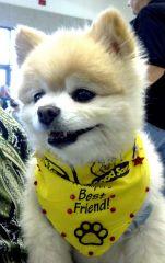 Our Rally Dog