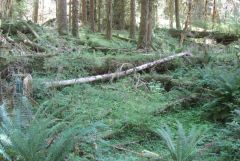 Forest floor with downed logs