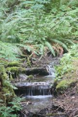 Small stream waterfalls