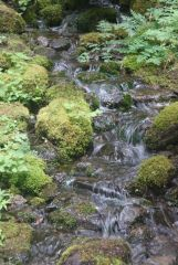 Small stream rapids
