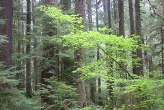 Understory green tree