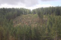 01 Logged area On hillside