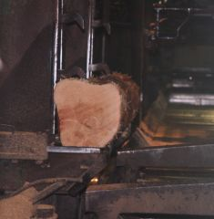 11   Log positioned For cutting
