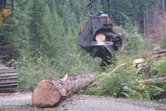 05   Chain Saw that Cut The Log