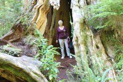 2 Louise Inside Western Red Cedar