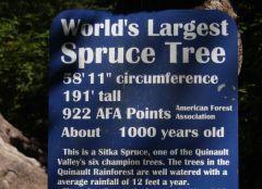 6 Sign   Largest Sitka Spruce