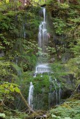 Quinault Valley of Olympic Peninsula