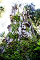 4 Top Of Record Western Red Cedar
