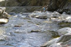 07 Swift River in Coos Canyon