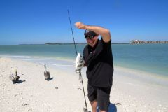 Another sheephead