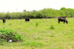 Okeechobee: A Texas Cow Town in the Middle of Florida