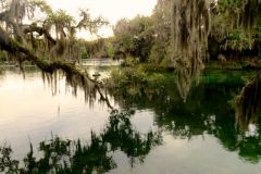 The Manatees of Florida's Blue Springs