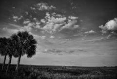 Paynes Prairie Landscape 1