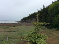 On the way to Cape Enrage NB