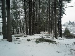 Before tree work