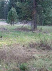 Deer at Yosemite March 2015