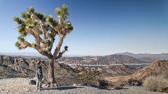 Joshua Trees, en route to Grand Canyon
