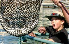 Grandson's big catch, Lake Havasu