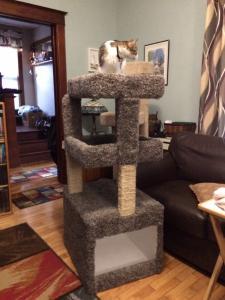 Cat Tree 1.JPG