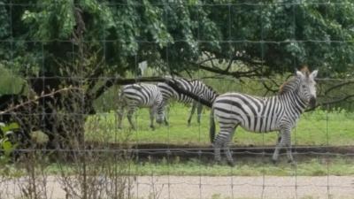 strange horses.jpg